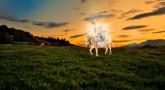 L'âne du Machia'h survivra-t-il à la guerre de Gog et Magog ?