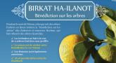 [Imprimer] Birkat Ha-Ilanot, la bénédiction sur les arbres !