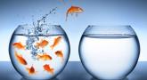 Emouna : la leçon du poisson !