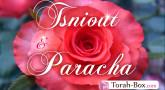Tsniout et Paracha : En route vers la rédemption ! (Vaéra)