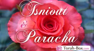 Tsniout & Paracha : Se connecter à l'éternité (Nasso)