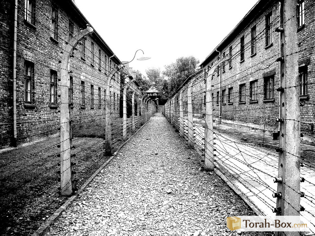 Auschwitz camp pictures concentration