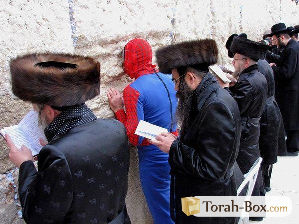 http://media.torah-box.com/pourim-insolite-spiderman-au-kotel-322.jpg
