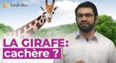 Kosher-Box : La Girafe est Cachère !