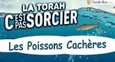 La Torah, c'est pas sorcier : Les Poissons Cachères