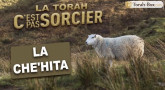 La Torah, c'est pas sorcier : LA CHE'HITA (viande cachère)